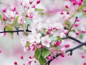 la mode s'inspire des couleurs du printemps
